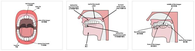 英語を発音する際の口の動きまで矯正